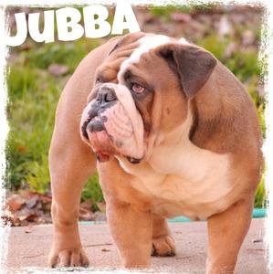 Jubba